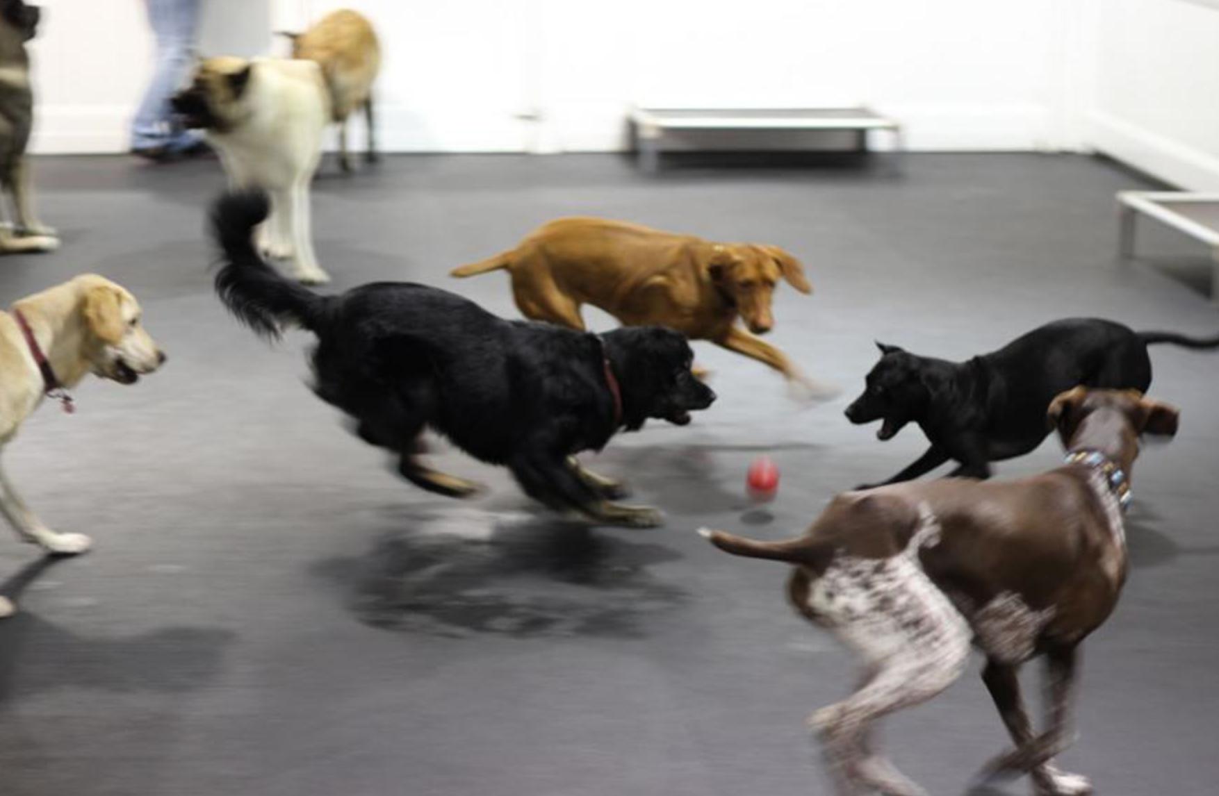 H tels de luxe pour chiens for Hotels qui acceptent les chiens
