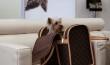 Top 5 des services de luxe pour animaux