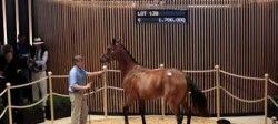 vente yearling deauville