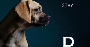 hotels de luxe chiens